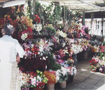 Mercado do Bolhao - Portugal