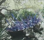 Blue and Purple Boat, Dale Chihuly - Botanical Gardens, Phoenix, AZ
