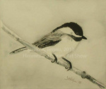 Maine Chickadee by David A. Belyea