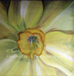 Garden VII Daffodil by Kara Downs