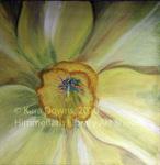 Garden VII Daffodil