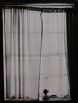 Window Still Life