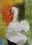 Swan by Jean Gutierrez