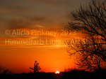 Callie's Sunset by Alicia Pinkney