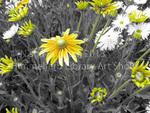 Yellow by Nisha Punatar