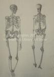 Skeleton Study by Kate Ovington