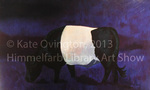 Belted Galloway Study by Kate Ovington