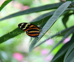 Butterfly at Brookside Garden, Maryland