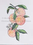 Oranges by Mollie Kotzen
