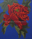 Chinese Peony by Meaghan Heselden