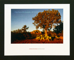 Sedona Sunset by Barbara McGowan
