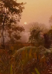 Sundarbans Sunrise by Jennifer Solt